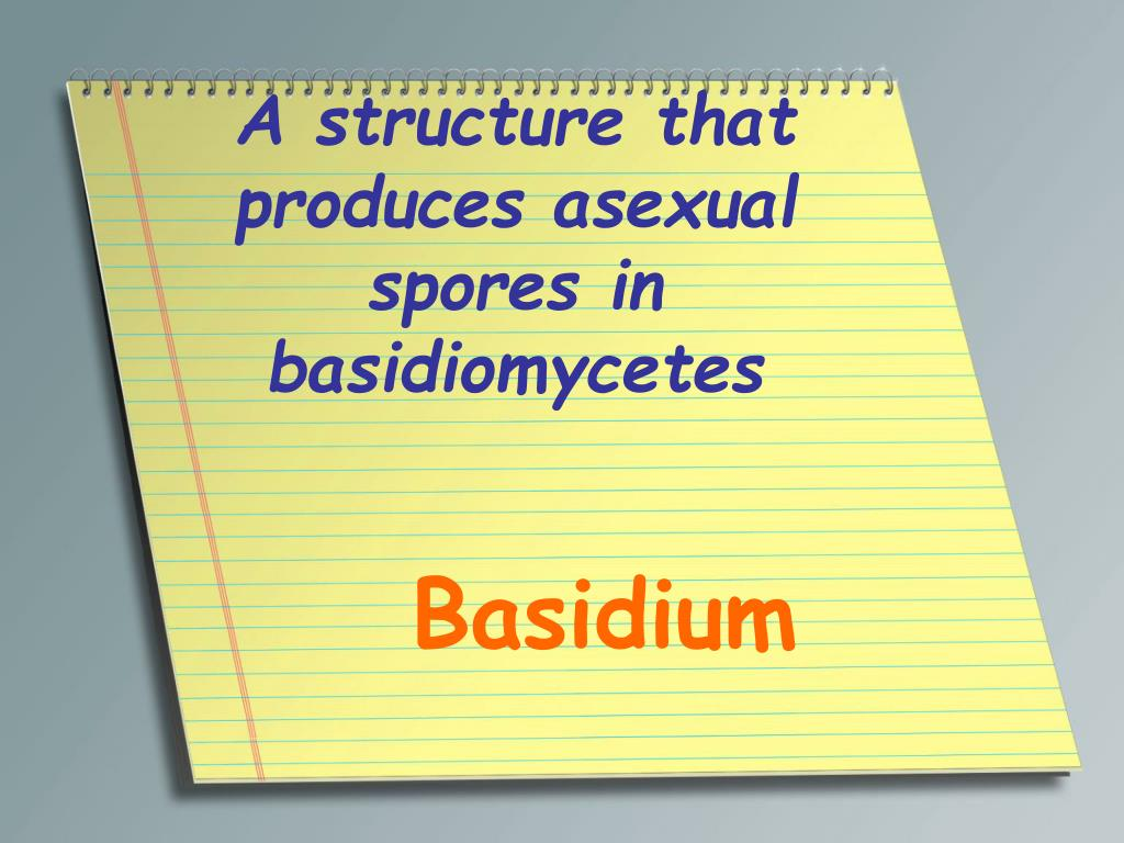 A structure that produces asexual spores in basidiomycetes