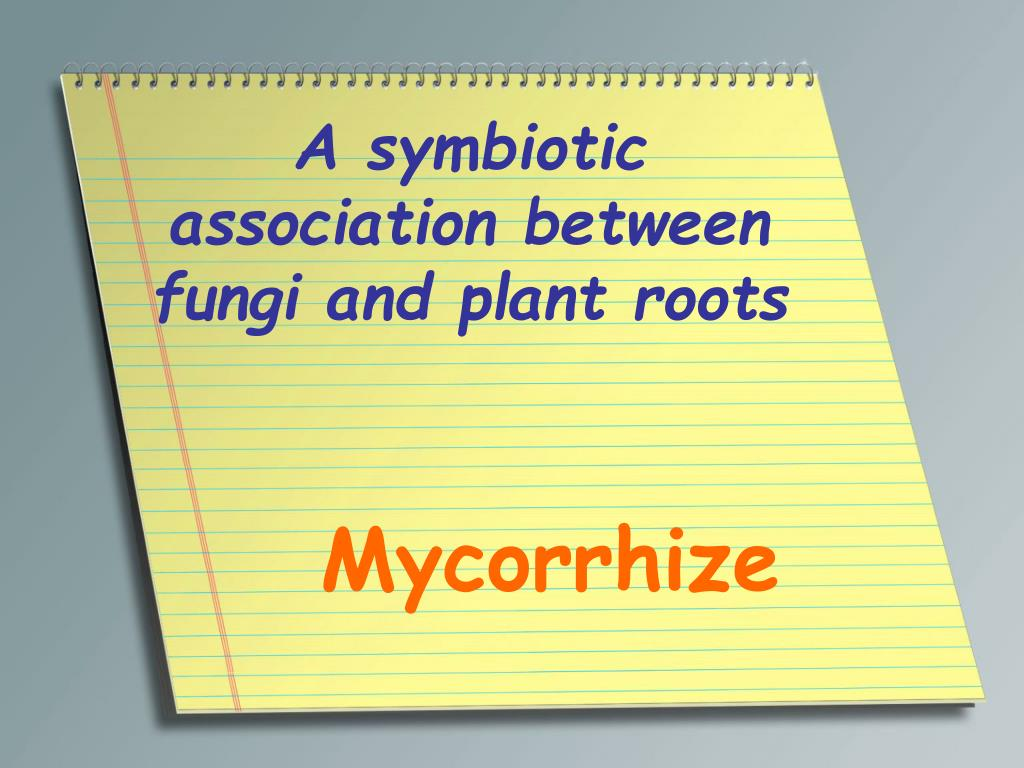 A symbiotic association between fungi and plant roots