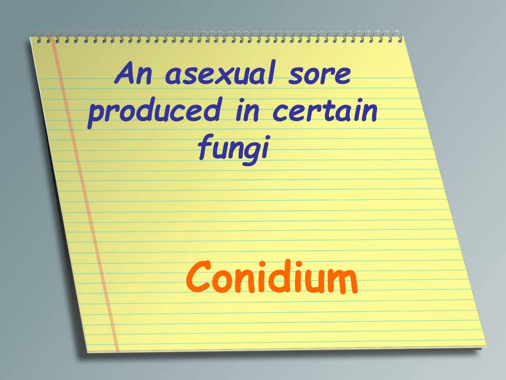 An asexual sore produced in certain fungi