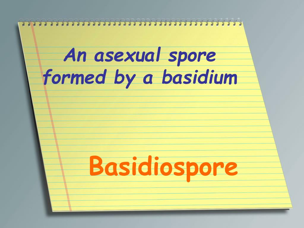 An asexual spore formed by a basidium