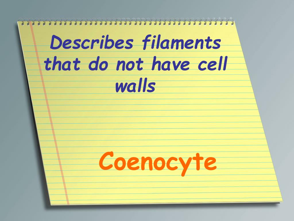 Describes filaments that do not have cell walls