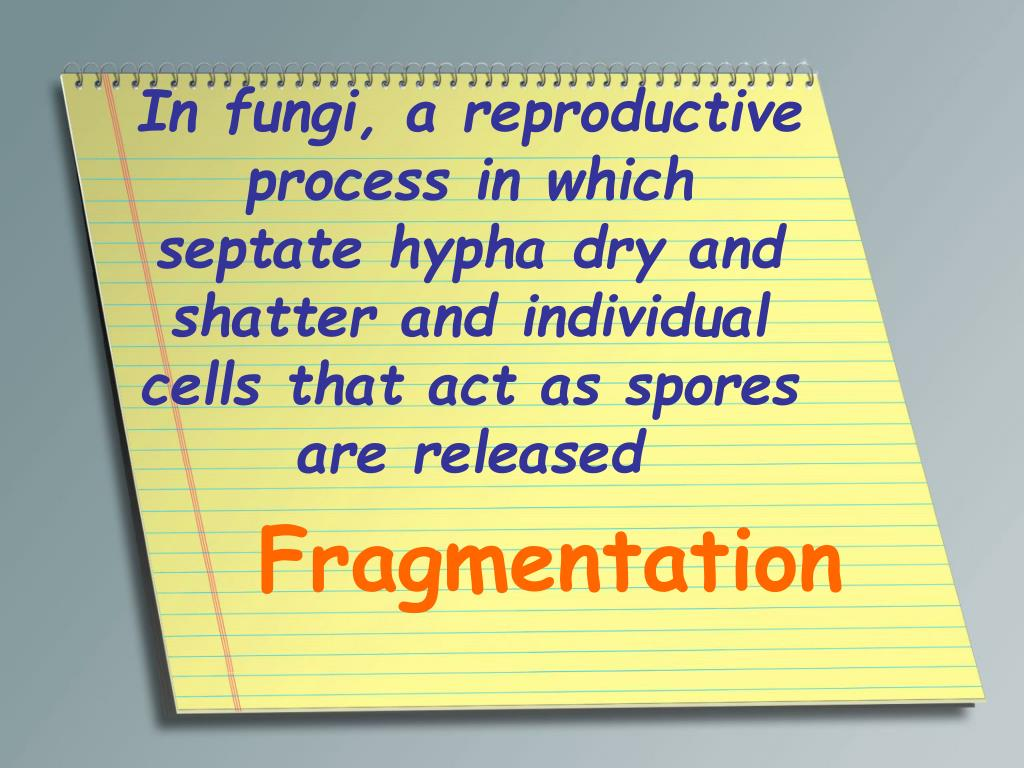 In fungi, a reproductive process in which septate hypha dry and shatter and individual cells that act as spores are released