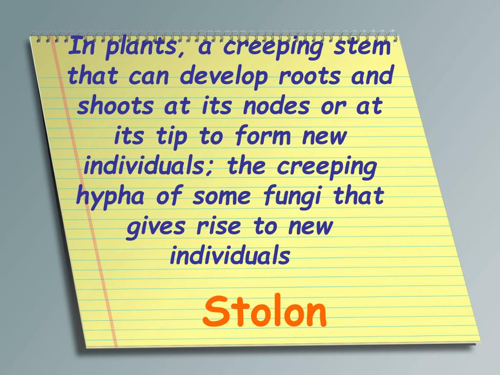 In plants, a creeping stem that can develop roots and shoots at its nodes or at its tip to form new individuals; the creeping hypha of some fungi that gives rise to new individuals