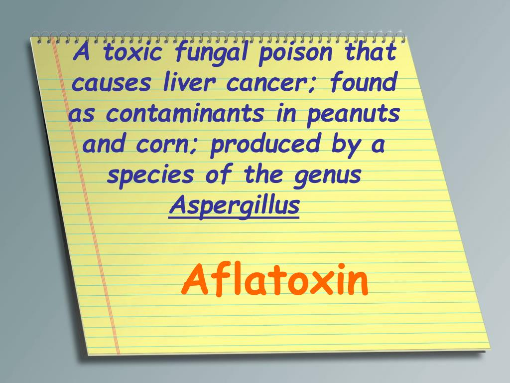 A toxic fungal poison that causes liver cancer; found as contaminants in peanuts and corn; produced by a species of the genus