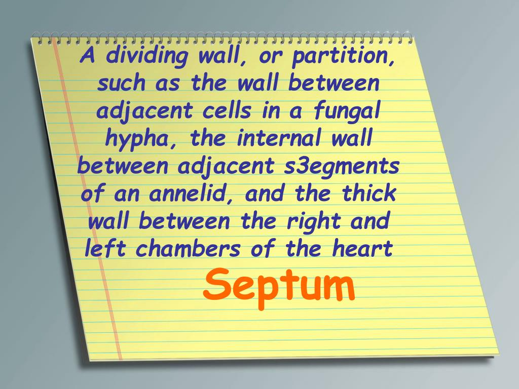 A dividing wall, or partition, such as the wall between adjacent cells in a fungal hypha, the internal wall between adjacent s3egments of an annelid, and the thick wall between the right and left chambers of the heart