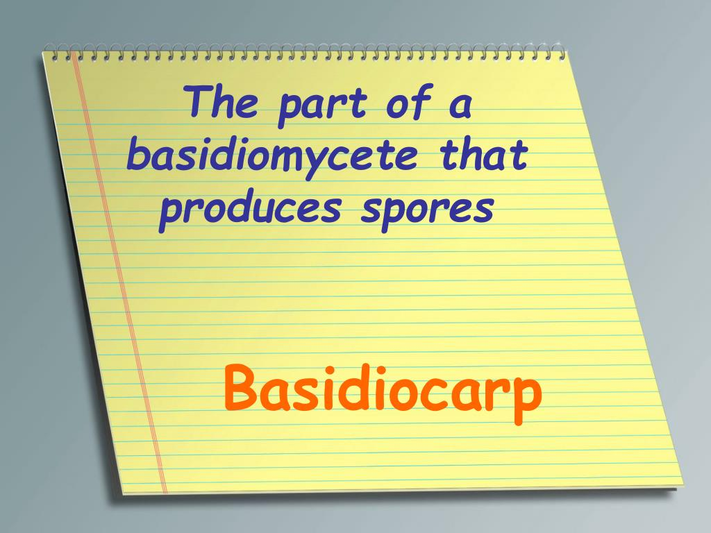 The part of a basidiomycete that produces spores