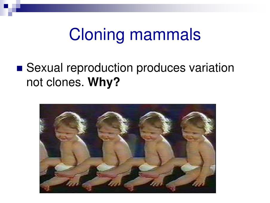 Cloning mammals