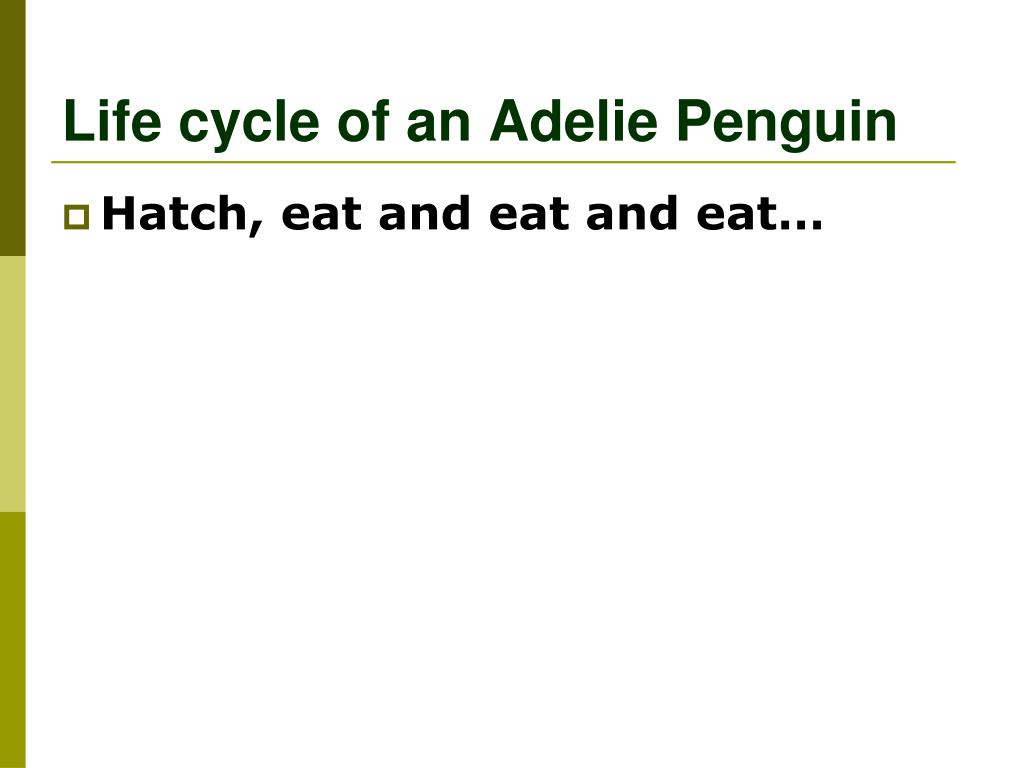 Life cycle of an Adelie Penguin