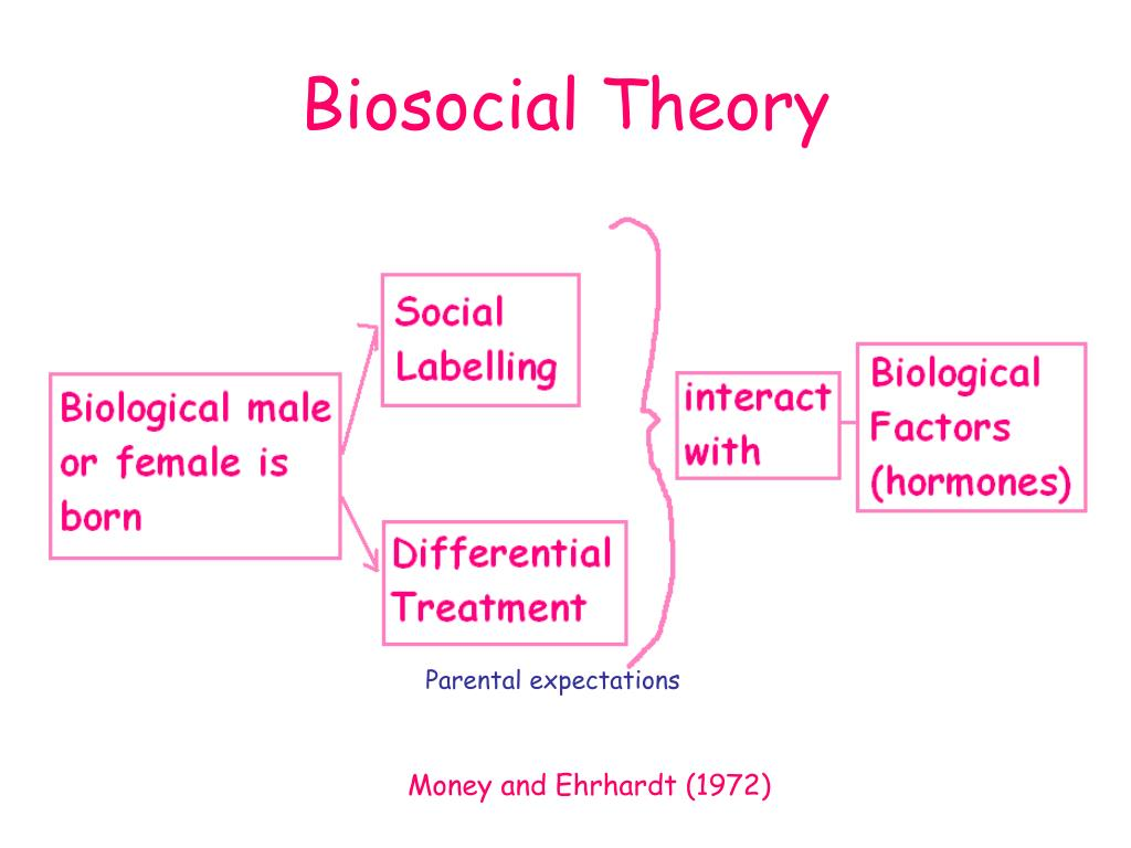 describe and evaluate the biosocial approach to gender development essay