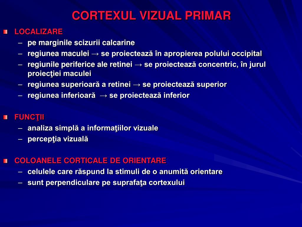 CORTEXUL VIZUAL PRIMAR