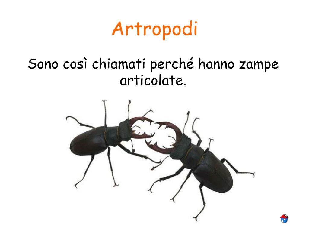 Artropodi