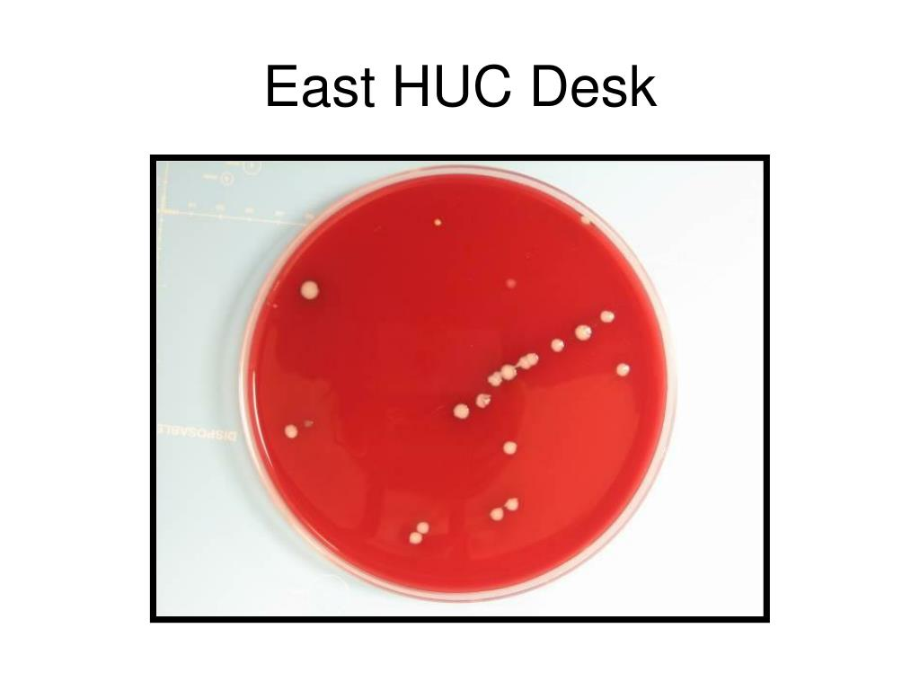 East HUC Desk