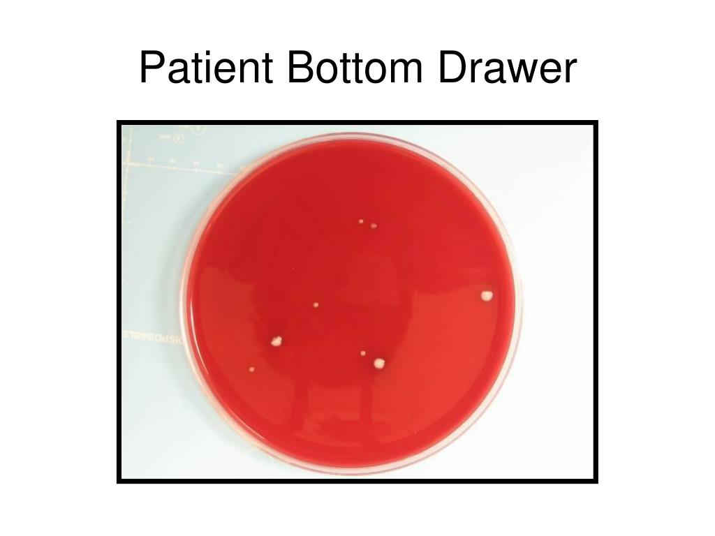 Patient Bottom Drawer
