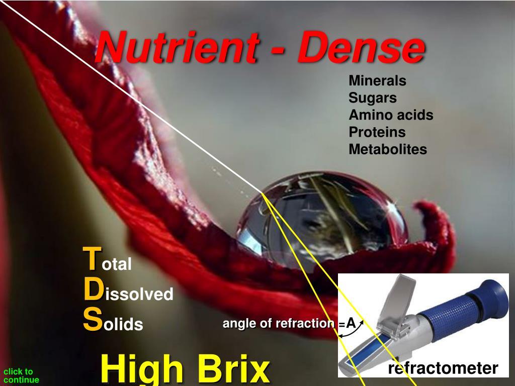 Nutrient - Dense
