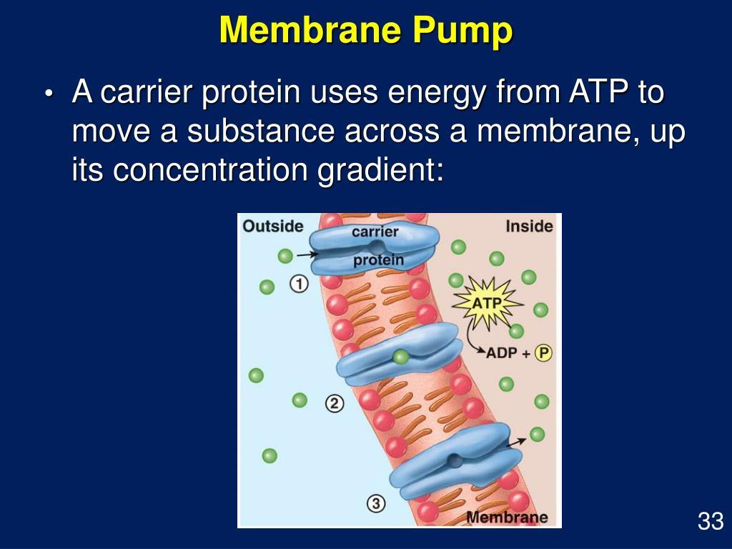Membrane Pump