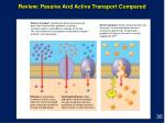 review passive and active transport compared