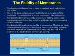 the fluidity of membranes
