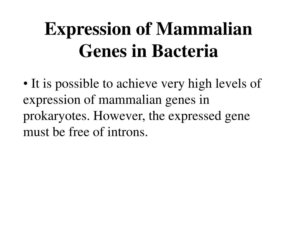 Expression of Mammalian Genes in Bacteria