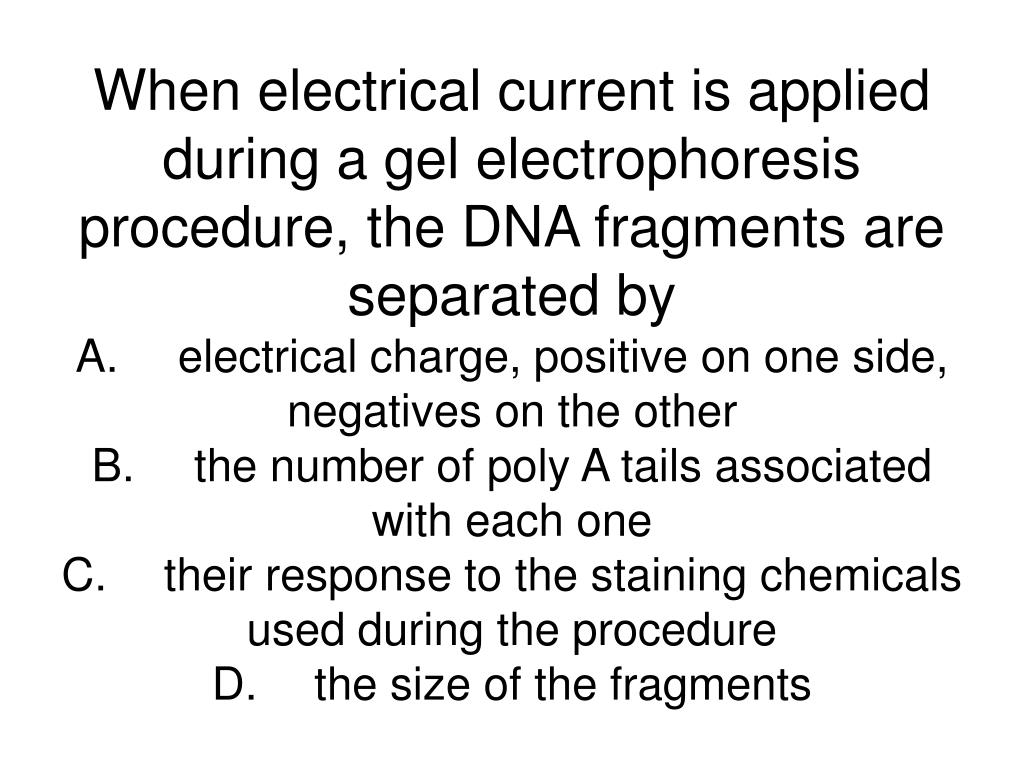 When electrical current is applied during a gel electrophoresis procedure, the DNA fragments are separated by