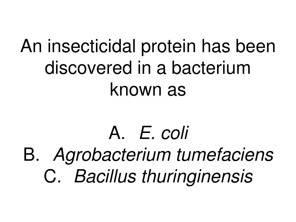 An insecticidal protein has been discovered in a bacterium known as