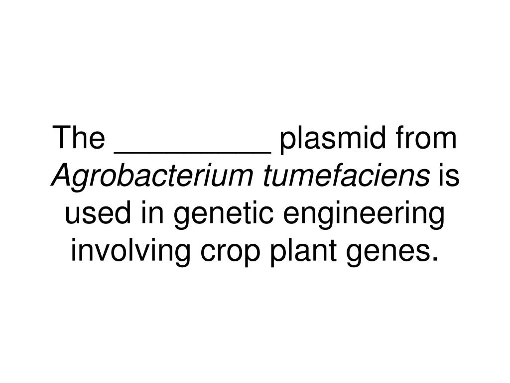 The _________ plasmid from