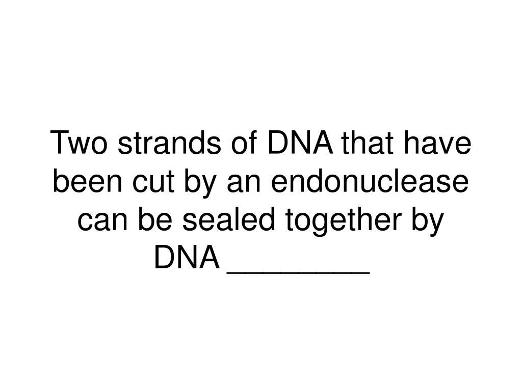 Two strands of DNA that have been cut by an endonuclease can be sealed together by