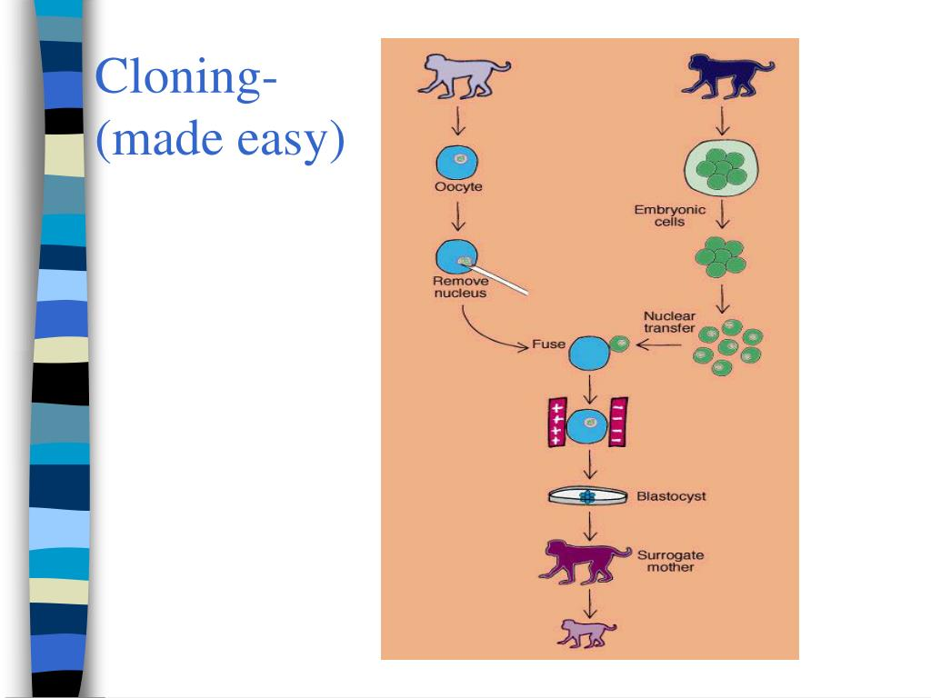 Cloning- (made easy)