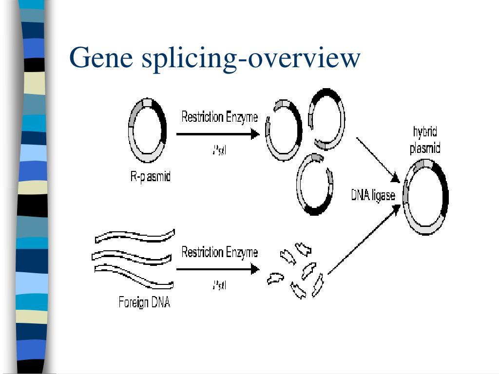 Gene splicing-overview