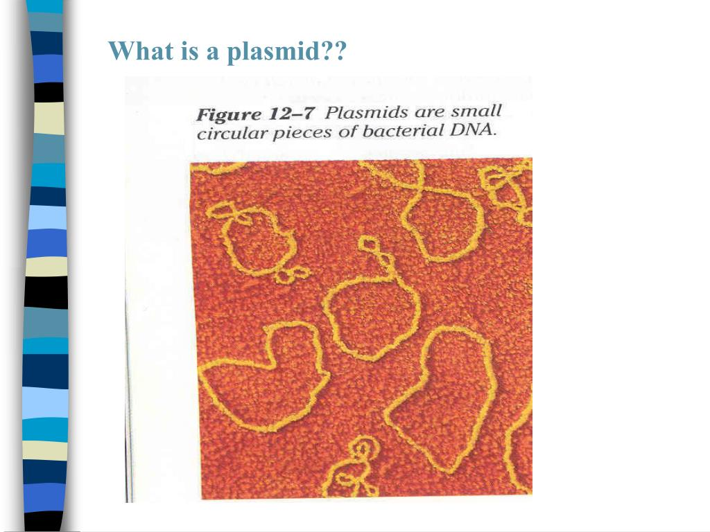 What is a plasmid??