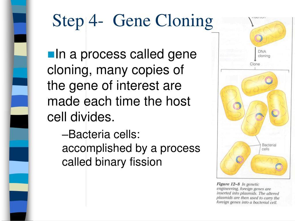 Step 4-  Gene Cloning