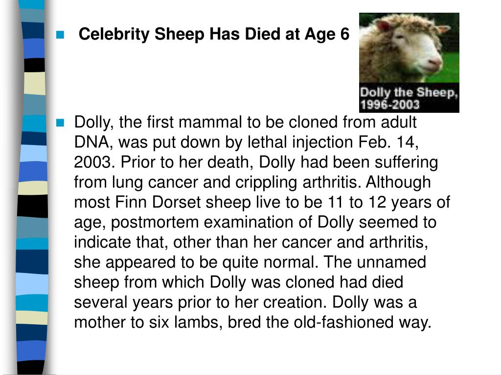 Celebrity Sheep Has Died at Age 6