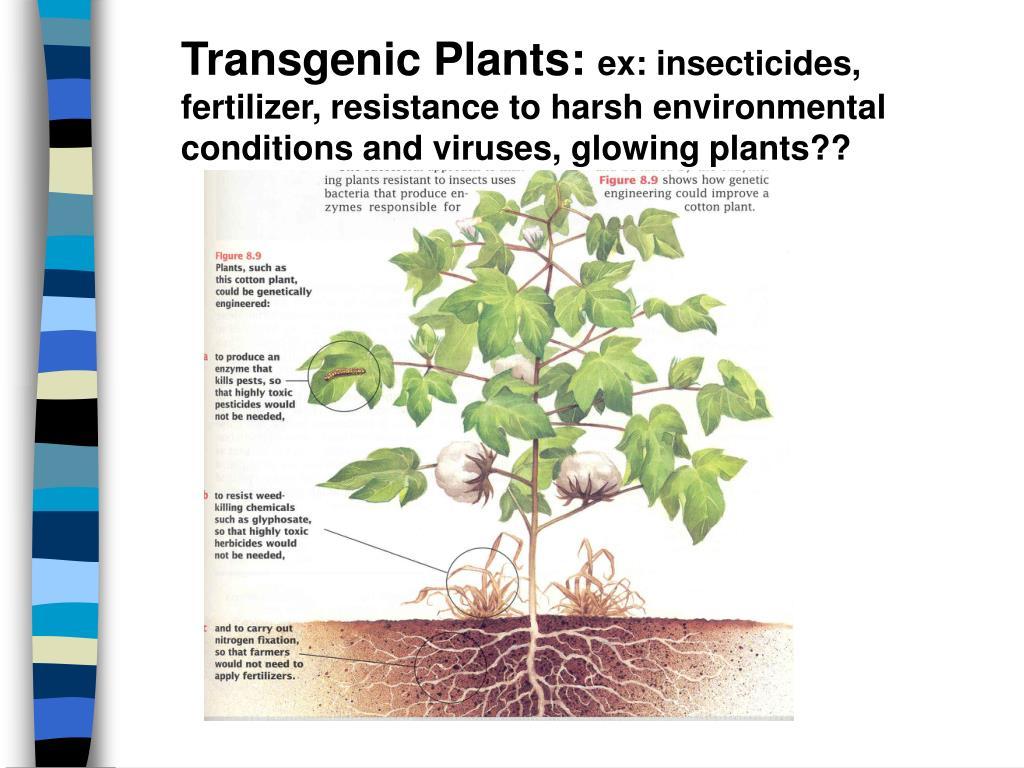 Transgenic Plants:
