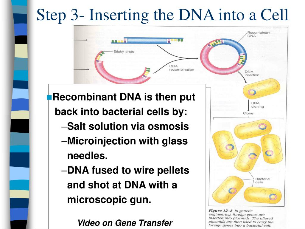 Step 3- Inserting the DNA into a Cell