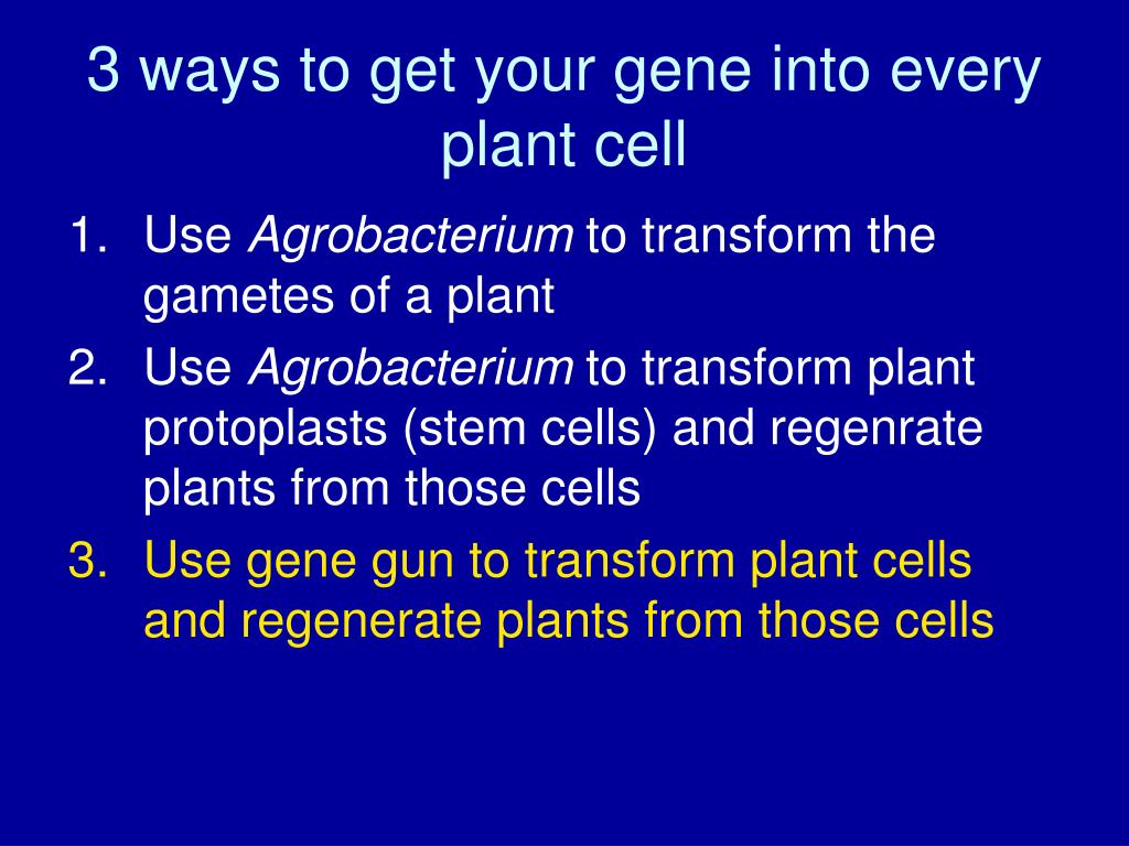 3 ways to get your gene into every plant cell
