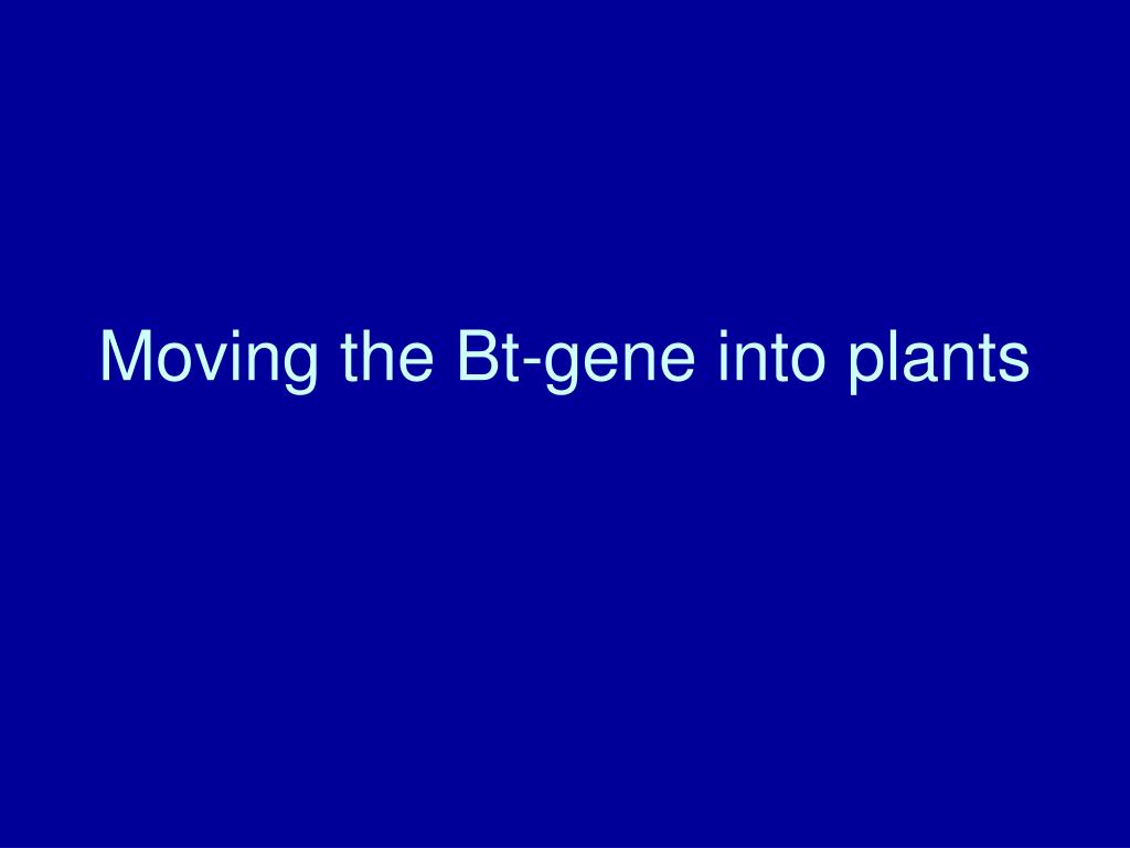 Moving the Bt-gene into plants