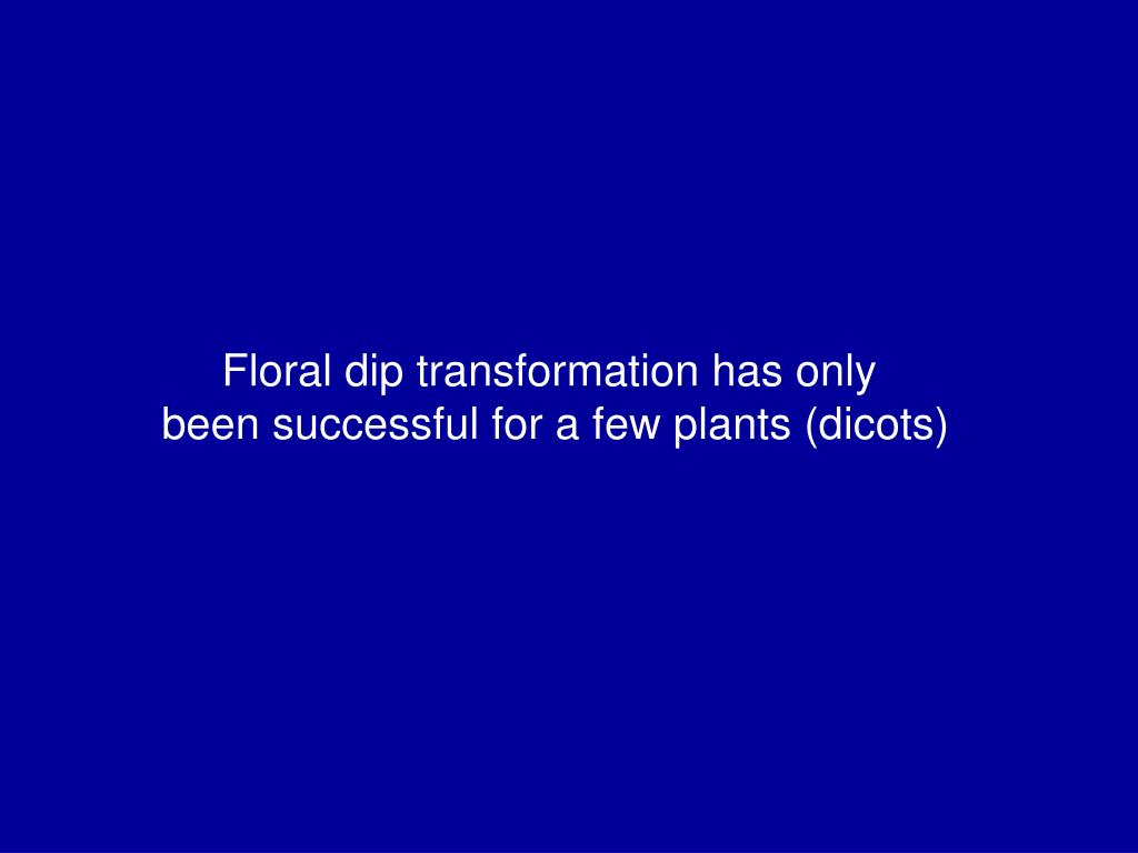 Floral dip transformation has only
