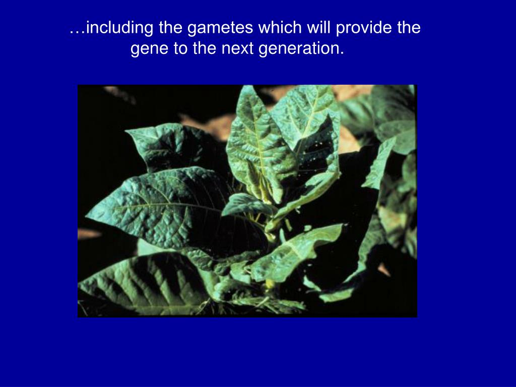 …including the gametes which will provide the