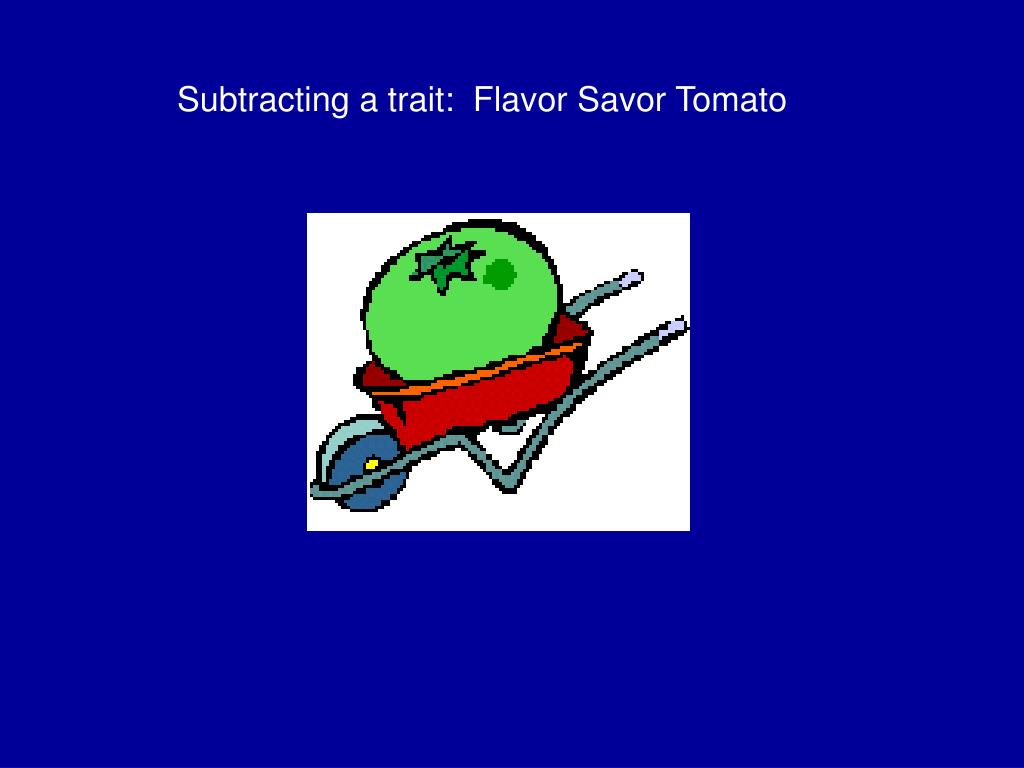 Subtracting a trait:  Flavor Savor Tomato