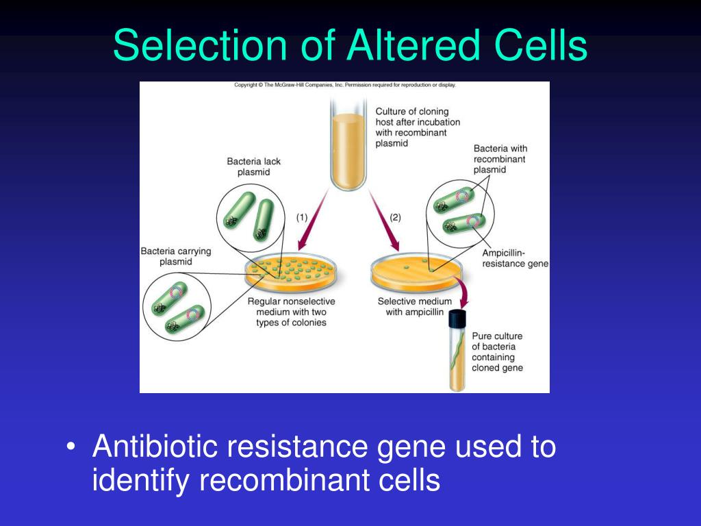 Selection of Altered Cells