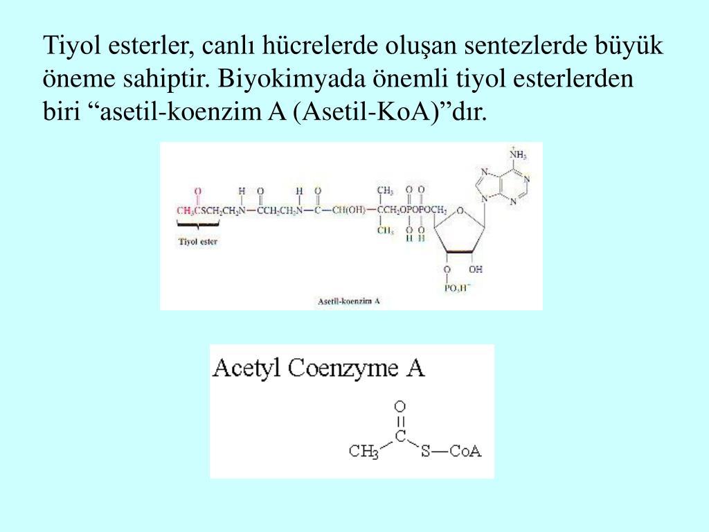 """Tiyol esterler, canlı hücrelerde oluşan sentezlerde büyük öneme sahiptir. Biyokimyada önemli tiyol esterlerden biri """"asetil-koenzim A (Asetil-KoA)""""dır."""