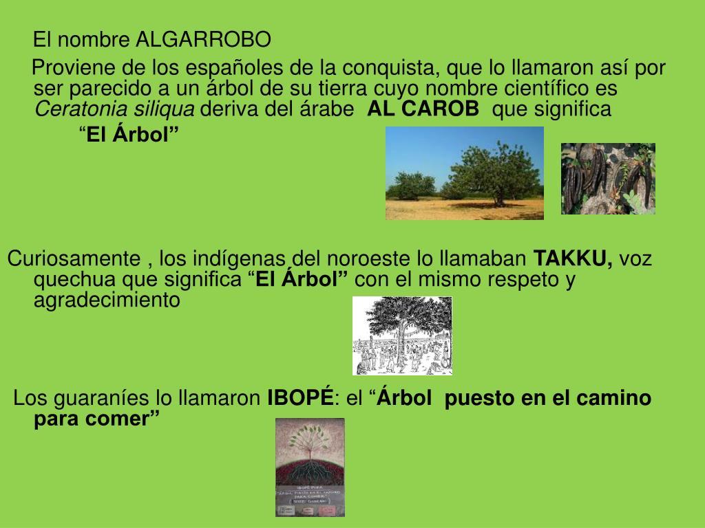 El nombre ALGARROBO