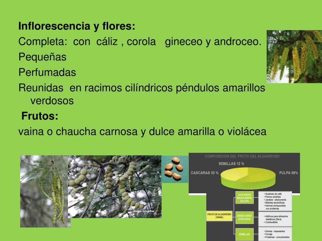 Inflorescencia y flores: