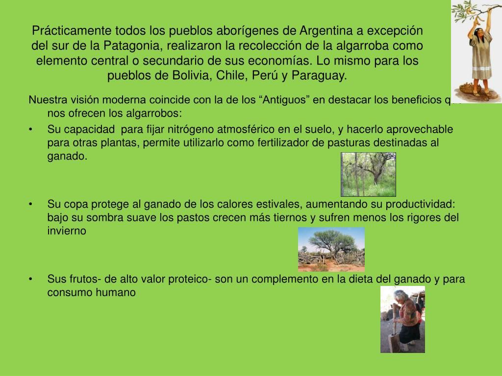 Prácticamente todos los pueblos aborígenes de Argentina a excepción del sur de la Patagonia, realizaron la recolección de la algarroba como elemento central o secundario de sus economías. Lo mismo para los pueblos de Bolivia, Chile, Perú y Paraguay.
