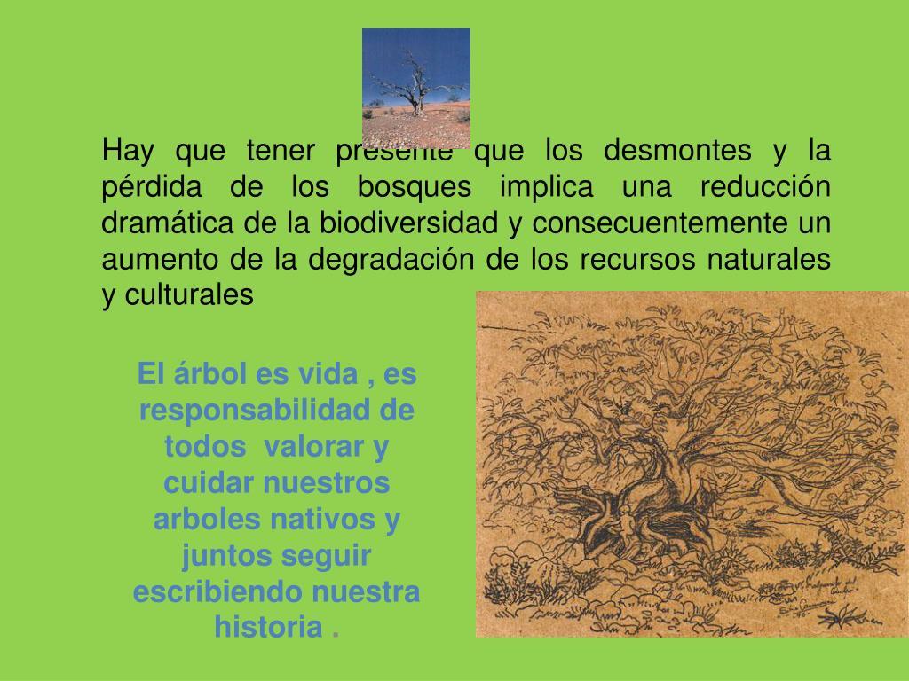 Hay que tener presente que los desmontes yla pérdida de los bosques implica una reducción dramática de la biodiversidad y consecuentemente un aumento de la degradación de los recursos naturales y culturales