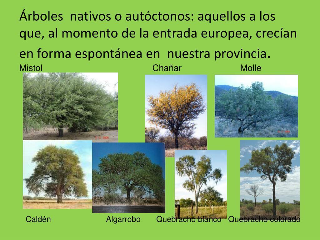 Árboles  nativos o autóctonos: aquellos a los que, al momento de la entrada europea, crecían en forma espontánea en  nuestra provincia