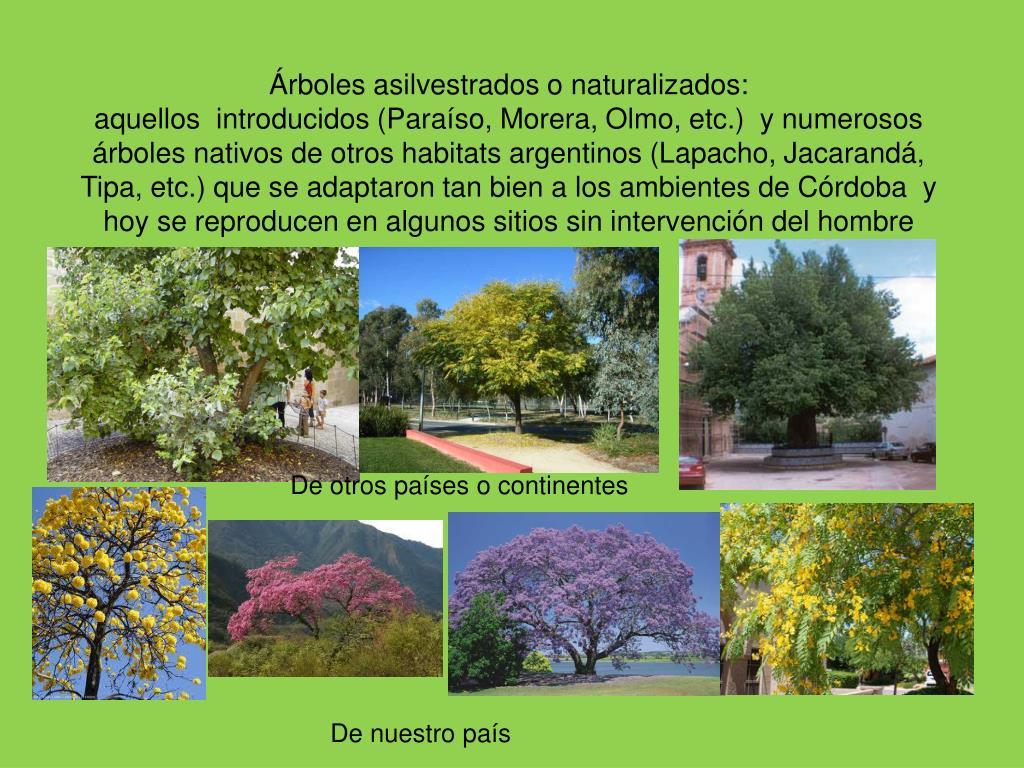 Árboles asilvestrados o naturalizados: