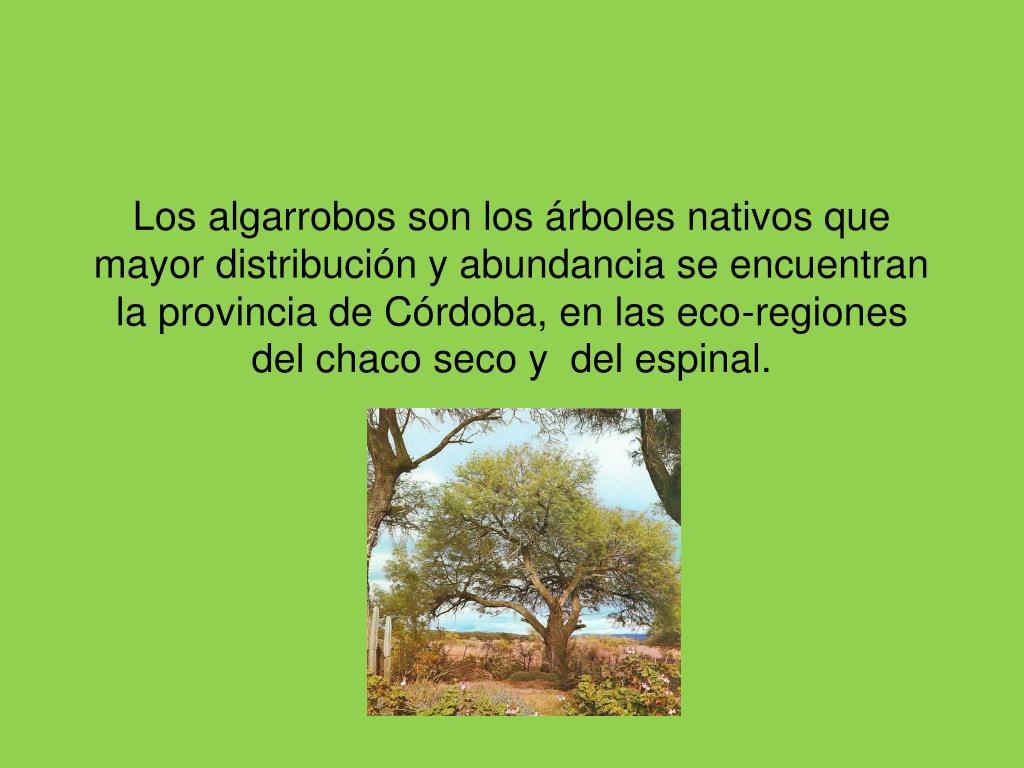 Los algarrobos son los árboles nativos que mayor distribución y abundancia se encuentran la provincia de Córdoba, en las eco-regiones del chaco seco y  del espinal.