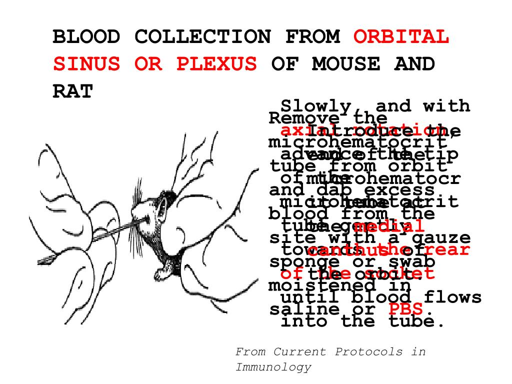 BLOOD COLLECTION FROM