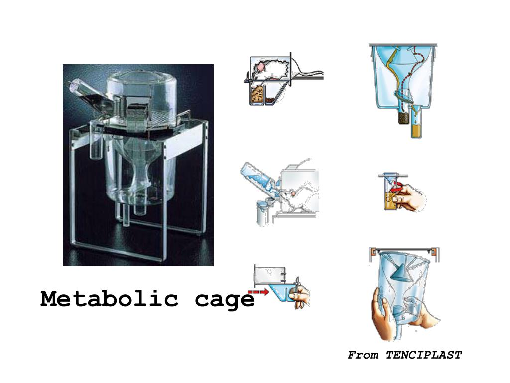 Metabolic cage