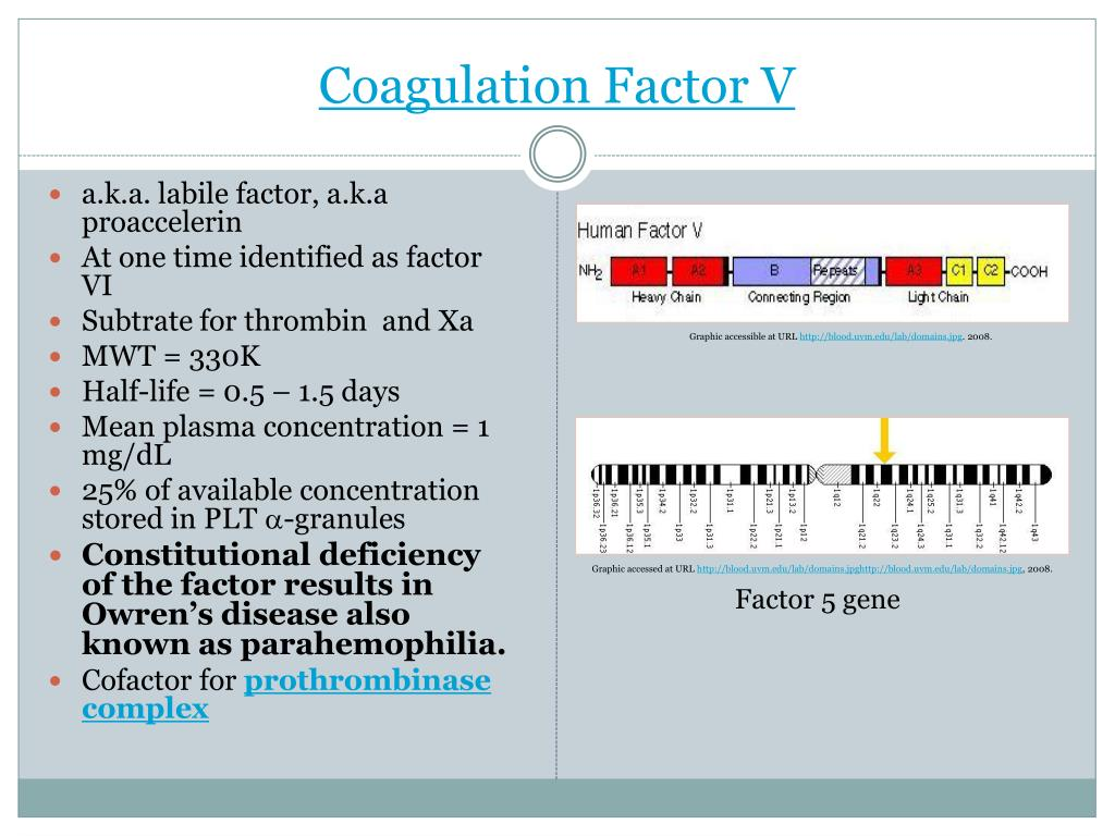 Coagulation Factor V